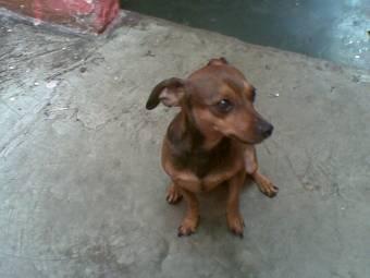 Raul Como Perri