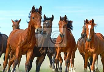 caballos galopando
