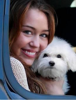 La Mascota De Miley