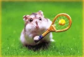 hamster jugando al tenis