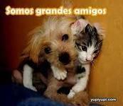 Gatito abrazado de el perrito