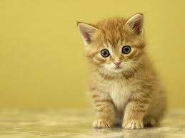 gatoo