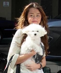 miley cyrus con su perrito