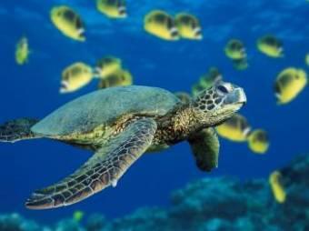 las tortugas estan en extincion